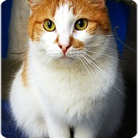Adopt A Pet :: Donald - Huntington, NY