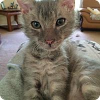 Adopt A Pet :: Caden - Monroe, GA