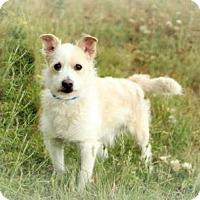Adopt A Pet :: Starshine - Cheyenne, WY