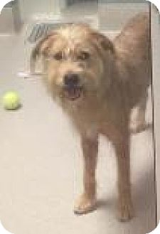 Terrier (Unknown Type, Medium) Mix Dog for adoption in Columbus, Georgia - Max 3022