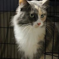 Adopt A Pet :: Bella - New Richmond,, WI