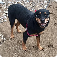 Adopt A Pet :: Reese - Middletown, OH