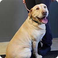 Adopt A Pet :: Buck - Sparta, NJ