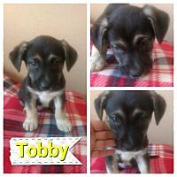 Adopt A Pet :: Tobby - LAKEWOOD, CA