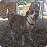 Adopt A Pet :: Tessa - Hammond, LA