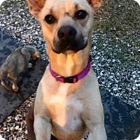 Adopt A Pet :: Lola - Southbury, CT