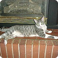Adopt A Pet :: Rocky - Newark, DE