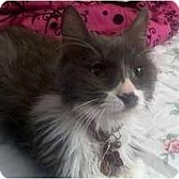 Adopt A Pet :: Quinton - Los Angeles, CA
