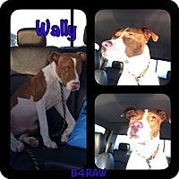 Adopt A Pet :: Wally - El Campo, TX