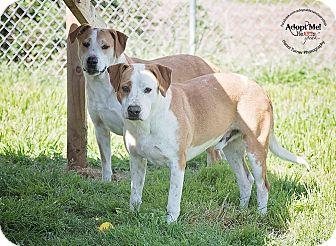 Labrador Retriever Mix Dog for adoption in Iola, Texas - Bryan and Milo