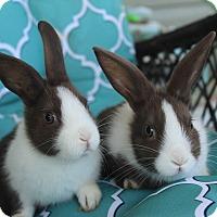 Adopt A Pet :: Jack & Jill - Hillside, NJ