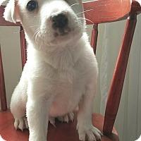 Adopt A Pet :: Sparky - West Grove, PA