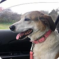 Adopt A Pet :: Shiloh - Springfield, MO