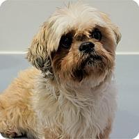 Adopt A Pet :: Tinkerbelle - Seattle, WA