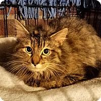 Adopt A Pet :: Jasmine - Jeannette, PA
