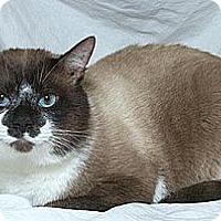 Adopt A Pet :: Kijou D. - Sacramento, CA