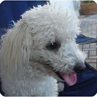 Adopt A Pet :: Natasha - Lake Forest, CA
