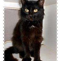 Adopt A Pet :: Ming Ming - Mobile, AL