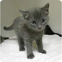 Adopt A Pet :: Chip - Maywood, NJ