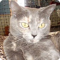 Adopt A Pet :: Gracie - Germansville, PA