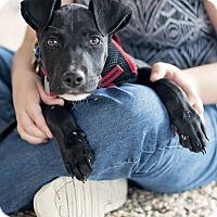 Adopt A Pet :: Roscoe - Kingwood, TX