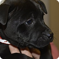 Adopt A Pet :: Axel - Meridian, ID