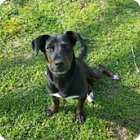 Adopt A Pet :: Miguel - Tallahassee, FL