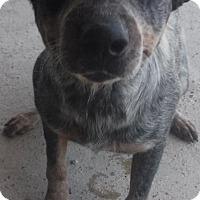 Adopt A Pet :: Kemper - Batesville, AR