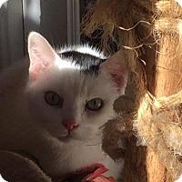 Adopt A Pet :: Ferdinand - Alexandria, VA