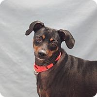 Adopt A Pet :: Charlie - Naperville, IL
