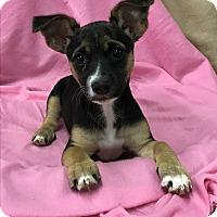 Adopt A Pet :: Ellie - Redding, CA