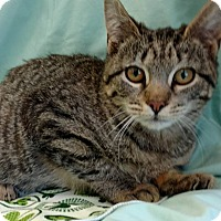 Adopt A Pet :: Jackie - Bensalem, PA