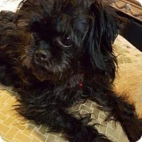 Adopt A Pet :: Inky - St. Louis Park, MN
