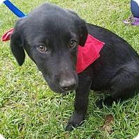Adopt A Pet :: Sheldon - Glastonbury, CT