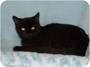 Domestic Mediumhair Kitten for adoption in McDonough, Georgia - Libby Lou