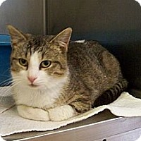 Adopt A Pet :: Spike - Dover, OH