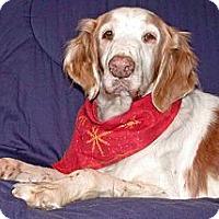 Adopt A Pet :: Clara - Buffalo, NY