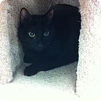 Adopt A Pet :: Lars - Phoenix, AZ