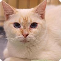 Adopt A Pet :: Cinnamon - Sacramento, CA