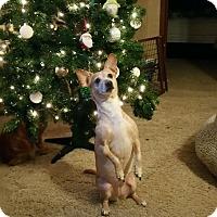 Adopt A Pet :: Lulu - Marietta, GA