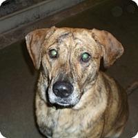Adopt A Pet :: Wrigley - Geneseo, IL