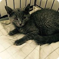 Adopt A Pet :: Vernon - Speonk, NY