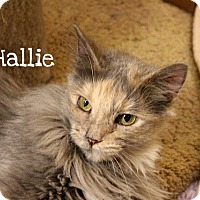 Adopt A Pet :: Hallie - Foothill Ranch, CA