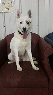 Spitz (Unknown Type, Medium)/Terrier (Unknown Type, Medium) Mix Dog for adoption in Owenboro, Kentucky - WARRIOR!