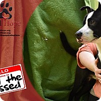 Adopt A Pet :: Basil the Blessed - Fort Worth, TX