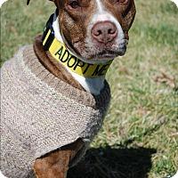 Adopt A Pet :: Ada - Richmond, VA