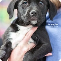 Adopt A Pet :: Guy - Gainesville, FL
