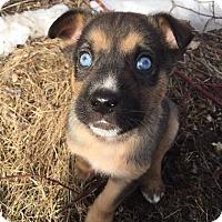 Adopt A Pet :: MURPHIE - Winnipeg, MB