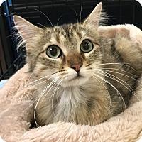 Adopt A Pet :: Chimi - Yorba Linda, CA