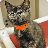 Adopt A Pet :: Daphne - Springfield, IL